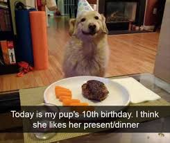 Birthday Animal Meme - 24 funny animal memes for your wednesday funny animals daily
