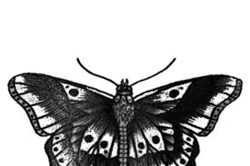 100 harry styles butterfly harry styles butterfly
