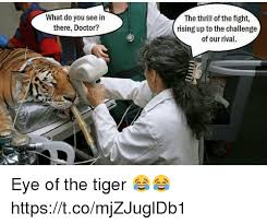 Eye Of The Tiger Meme - 25 best memes about eye of the tiger eye of the tiger memes