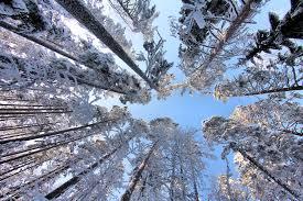 look up trees by kariliimatainen on deviantart