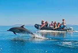 baja california cruise lindblad nat geo baja cruise experts