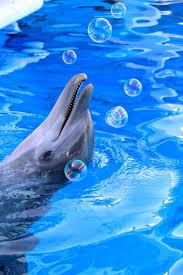 333 best dolphin golfinhos images on pinterest animals ocean