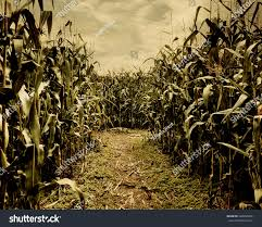 halloween nature background scary corn field halloween background horror stock photo 328356206