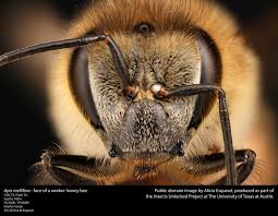 Parts Of The Face Anatomy The Anatomy Of Bees