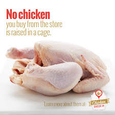 what does cage free mean is cage free chicken better