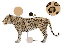 draw animals big cats anatomy patterns 2