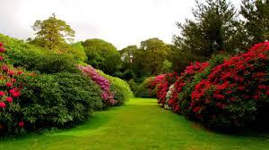 desktop beautiful nature flowers garden imageswhatsapp on high