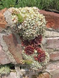 94 best sempervivums rock garden delights images on pinterest