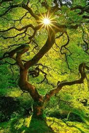 16 die bäume des herrn stehen voll saft die zedern des libanon