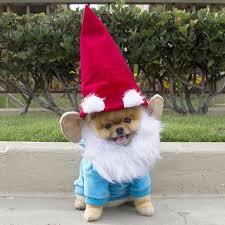 Lawn Gnome Halloween Costume Cutest Pomeranian Garden Gnome Dog Behavior Training