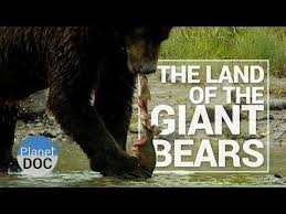 Animal Planet Documentary Grizzly Bears Full Documentaries - 15 best ideas for tatts images on pinterest grizzly bears wild