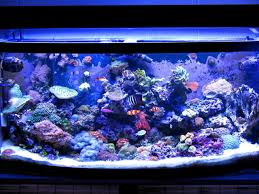 Reef Aquascape Designs Unique Aquascapes General Discussion Nano Reef Com Community