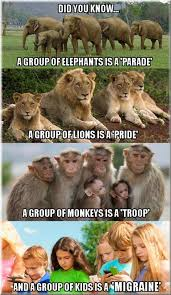 Sexy Monkey Meme - guys humor guys humor shared funny sexy stuff s post facebook