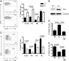 secreted igm enhances b cell receptor signaling and promotes