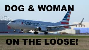 crazy american airlines passenger and her dog on the loose during