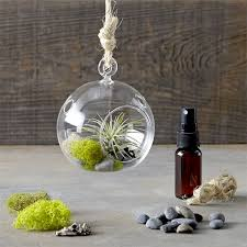 hanging air plant terrarium kit williams sonoma
