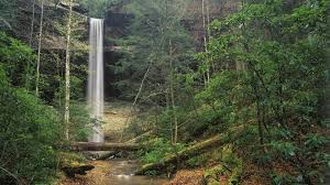 Kentucky Forest images Site collection images yahoo falls daniel boone national forest jpg
