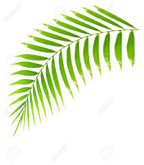 palm tree leaf clipart clipartsgram com