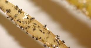 chasser les moucherons dans la cuisine 10 trucs pour chasser les mouches et les moucherons cuisine az