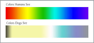 Are All Dogs Colour Blind Dog Vision How Dogs See The World