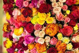 Multi Colored Roses Beautiful Bouquet Of Multicolored Roses U2014 Stock Photo Davit85