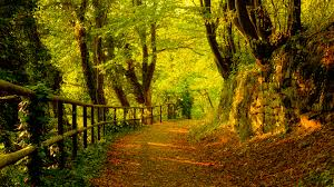 trees trees autumn season forest path fresh new hd wallpaper