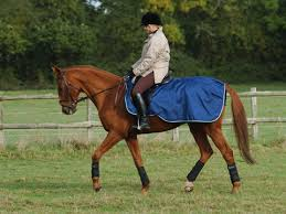 Buccas Rugs Paardenwinkel Be Bucas Smartex Riding Rug