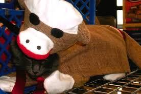 Sock Monkey Costume Cat In A Sock Monkey Costume Petful