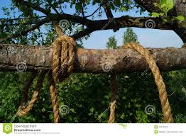 thick tree branch stock photo image 73785873