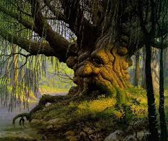 cool trees cool ass tree pic trees pinterest scenery natural wonders and