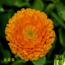 Calendula Flowers Compare Prices On Calendula Flower Online Shopping Buy Low Price