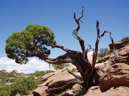 cool trees arizona of the hands