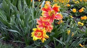 free photo flowers gardens spring floral free image on