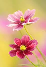 South African Wild Flowers - 10 best images about south african wild flowers on pinterest
