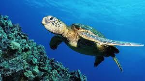 1280x720px 853215 sea turtle 155 14 kb 27 06 2015 by gangsta707
