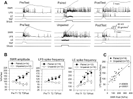 the contribution of activity dependent synaptic plasticity to