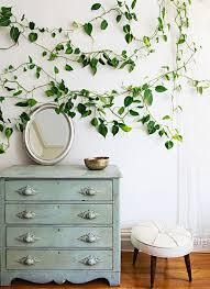 house plants that don t need light 10 houseplants that don t need sunlight the creative route