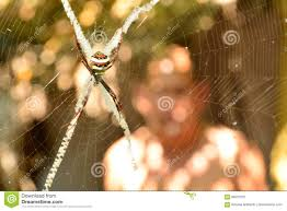 halloween header background spider on web look creepy and scary on nature background stock