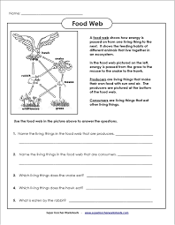 8 best images of food web worksheets 7th grade web food chain