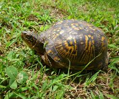 from bluebirds to turtles july 2014