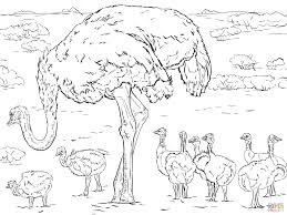running ostrich coloring page free printable coloring pages