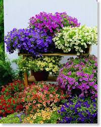 1633 best container gardening ideas images on pinterest