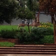 animal sightings deer killings at jpl prompt warning about