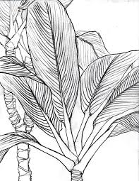 line art drawings bing images postcards notebooks pinterest