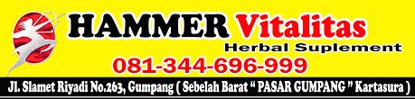 hammer of thor di papua obat kuat di papua