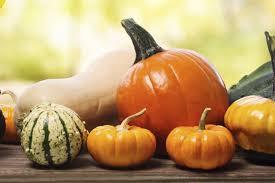 thanksgiving feast symbol pumpkin turkey corn