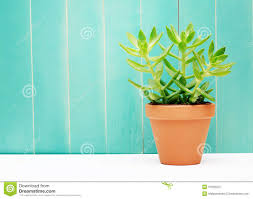 green plant on a teal colored wall background stock photo image