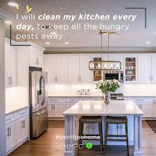 how to clean cupboards after pest top 5 new years pest resolutions for 2021