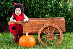 Ladybug Infant Halloween Costumes Baby Halloween Costume Stock Images Image 16154544