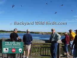 Backyard Wild Birds by Backyard Wild Birds Blog